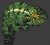 Chameleon PDF