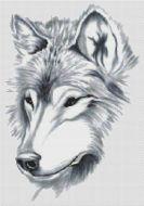 A Beautiful Wolf