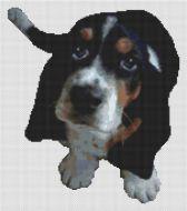 Basset Hound Puppy PDF