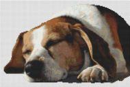 Dog Nap PDF