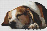 Dog Nap
