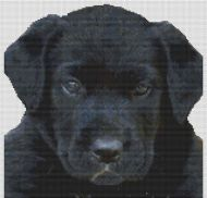 Black Lab Puppy PDF
