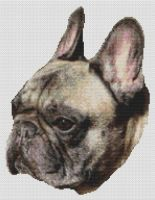 Brindle French Bulldog PDF