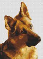 German Shepherd - Curiosity