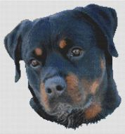 Rottweiler Serenity PDF