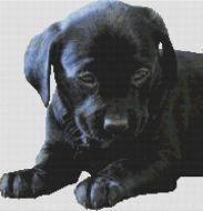 Black Lab Puppy 2