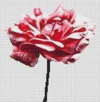 Pink Carnation PDF