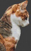 Socks - Cat