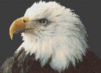 Majestic Bald Eagle PDF