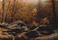 Autumn Forest PDF