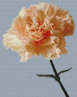 Peach Carnation PDF