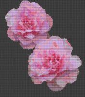 Pink Camellia PDF