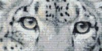 Eyes of a Snow Leopard PDF