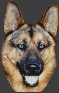 Spirit - German Shepherd