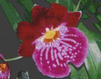 Red Orchid PDF