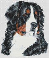 Bernese Mountain Dog PDF