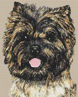Cairn Terrier PDF