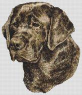 Chocolate Labrador Retriever PDF