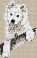 Samoyed Pup