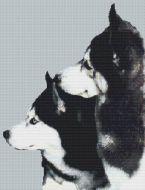 Husky Pair