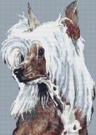 Chinese Crested PDF