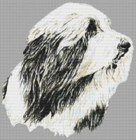 In Motion - Bearded Collie