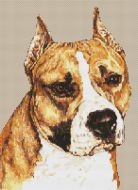 American Staffordshire Terrier PDF