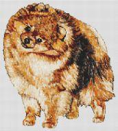Pomeranian PDF