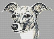 Italian Greyhound PDF