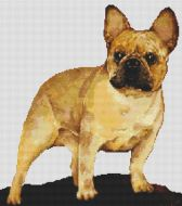 French Bulldog - Fawn PDF