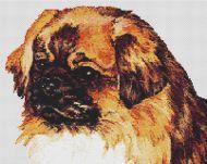 Tibetan Spaniel Portrait PDF