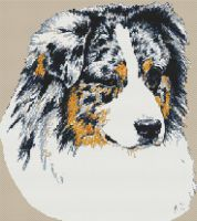 Blue Merle Australian Shepherd PDF