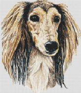 Tri-colored Saluki
