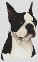 Boston Terrier - Black and White PDF
