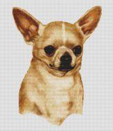 Chihuahua 2