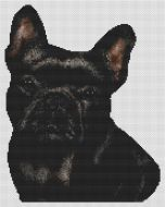 Black French Bulldog PDF