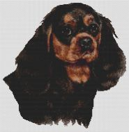 Black & Tan Cavalier King Charles Spaniel