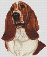 Red and White Basset Hound