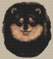 Pomeranian Black and Tan PDF