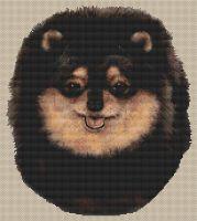 Pomeranian Black and Tan