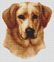 Yellow Labrador Retriever 2 PDF