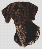 German Shorthaired Pointer 2