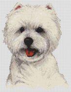 West Highland Terrier 2