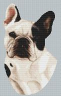 Spotted French Bulldog PDF