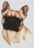 Fawn Masked French Bulldog