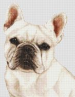 White French Bulldog PDF