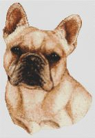 Cream French Bulldog PDF