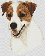 Brown and White Jack Russell Terrier PDF