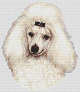 White Poodle 2