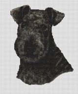 Black Lakeland Terrier PDF